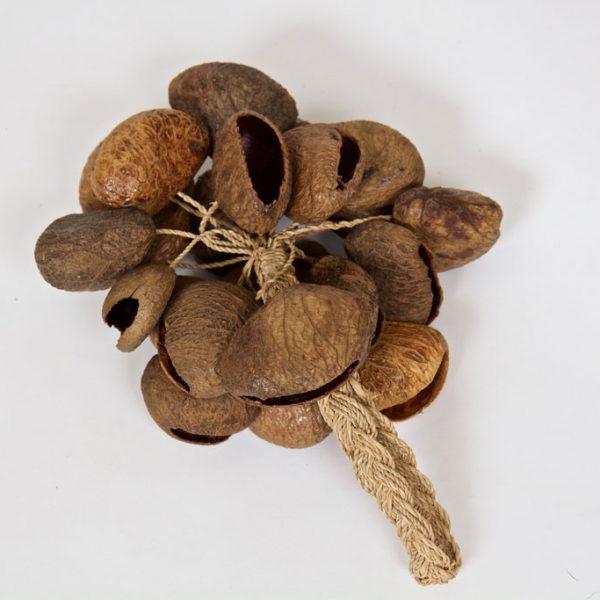 seed-pod-shaker