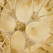 """12"""" Deerhide Hoop Drum3"""